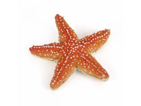 Etoile de mer - dim. 7 cm x 2 cm x 6,7 cm